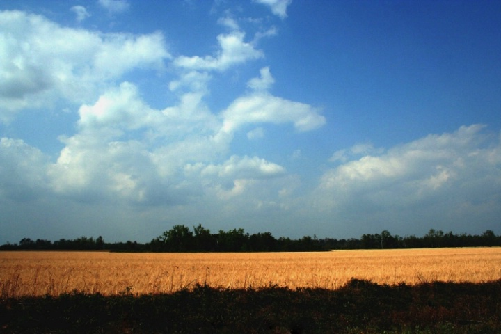 Florida countryside