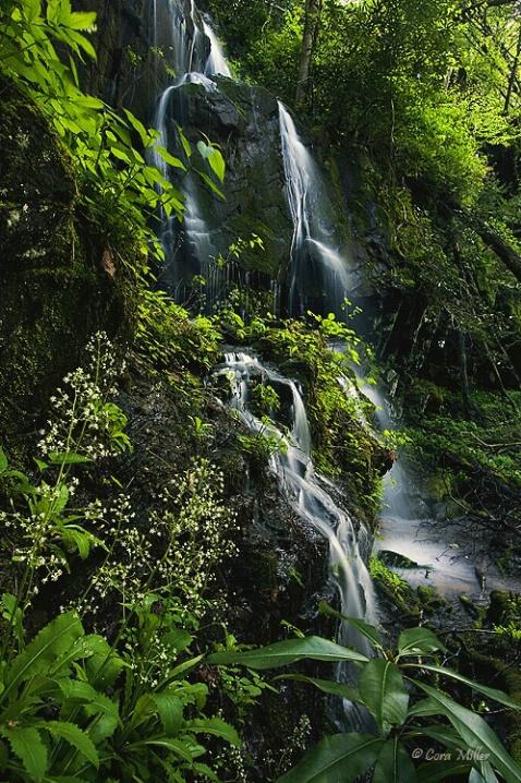 Paradise Found - Smoky Mountains Nat'l Park