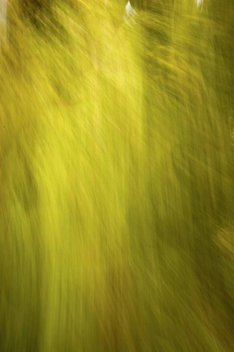 hoh forest shimmer 2
