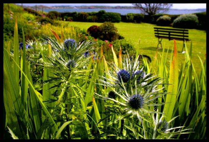 Iona garden