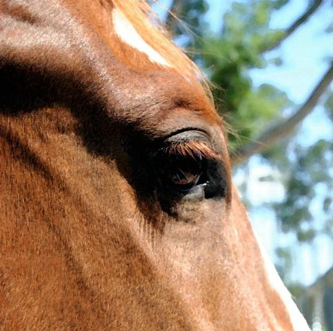 Horse's Eye View