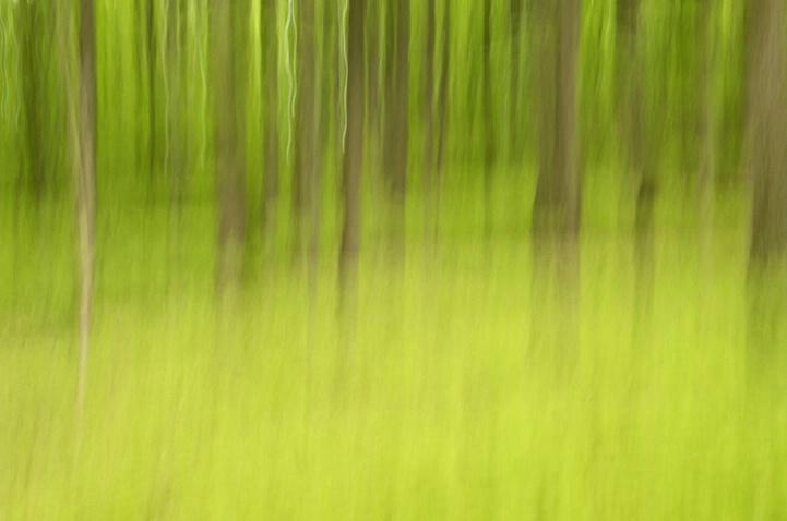 Fern Forest 5