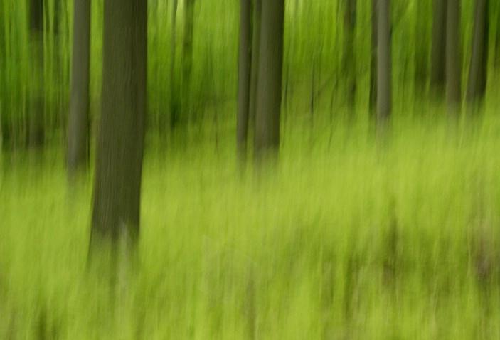 Fern Forest 7