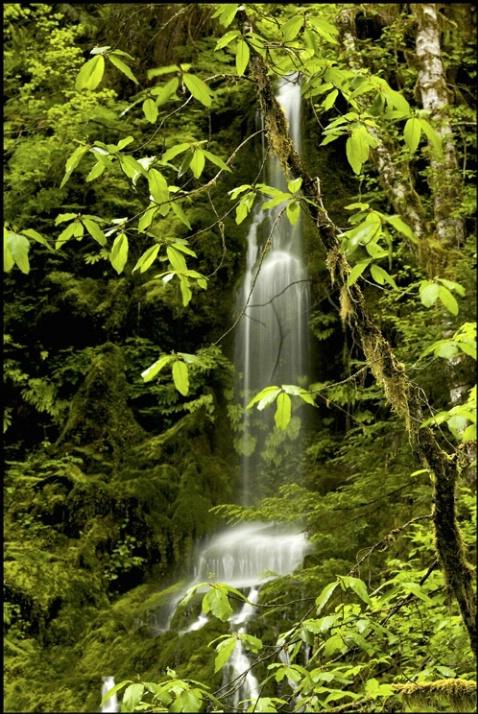 Quinault falls 3