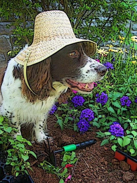 "I ""Dig"" Gardening!!"