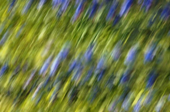 Blue Meadow
