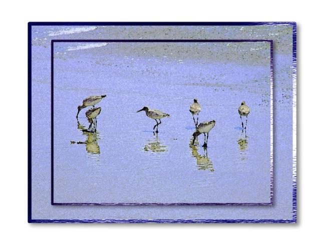 Beach Birds