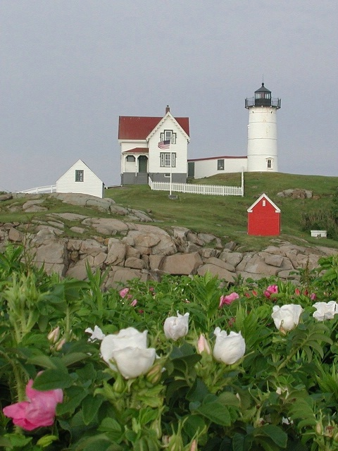 Nubble Light summer roses