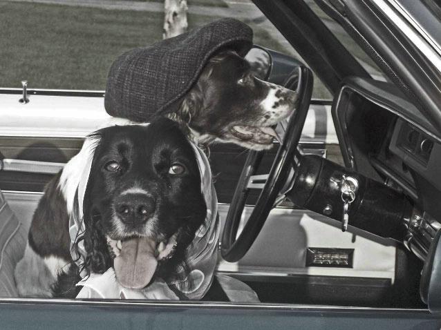 Crazy Driver!