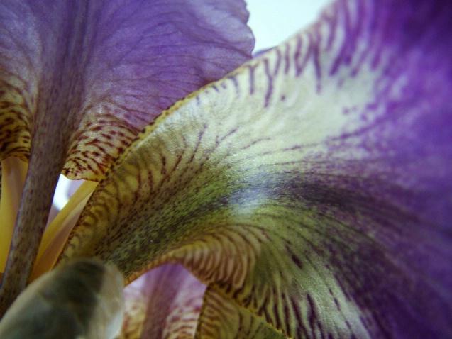 Simple Iris