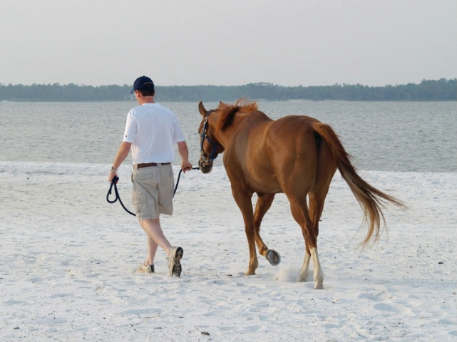 A horse and his man