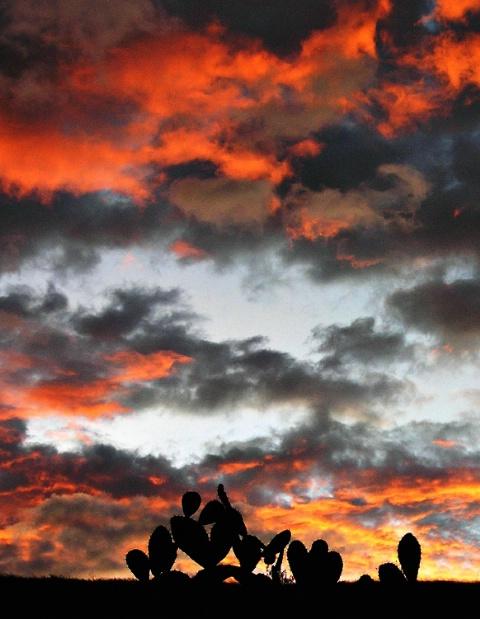 Catus Sunset