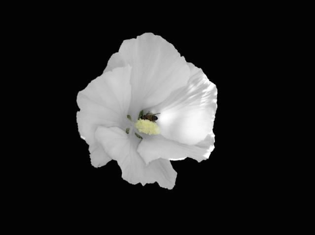A Flower's Friend