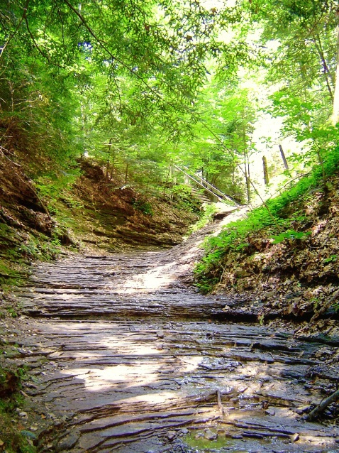Turkey Run State Park, IN