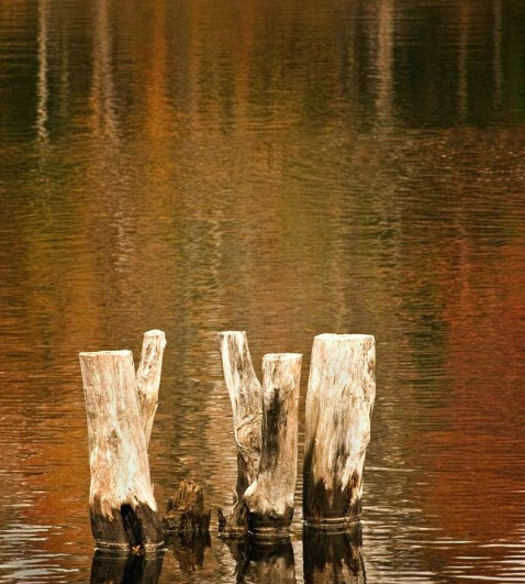 The Old Pilings