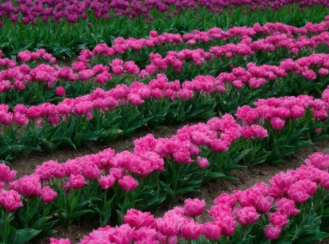 Soft Rows