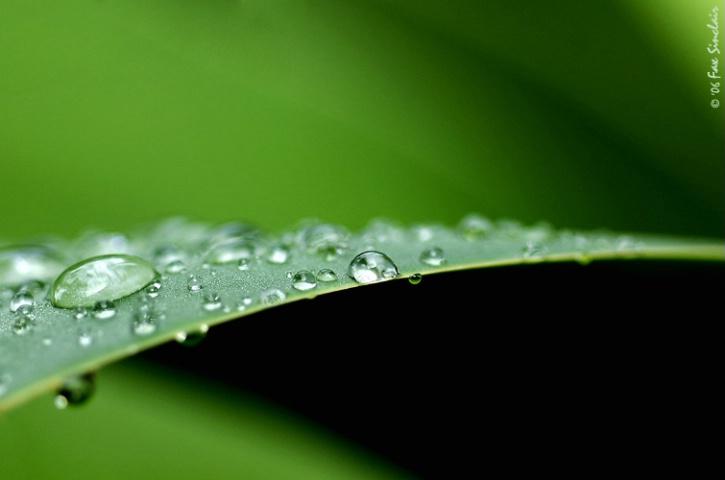 Rain Curves