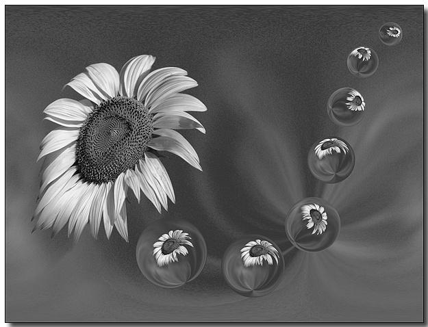 Sunflower Genesis