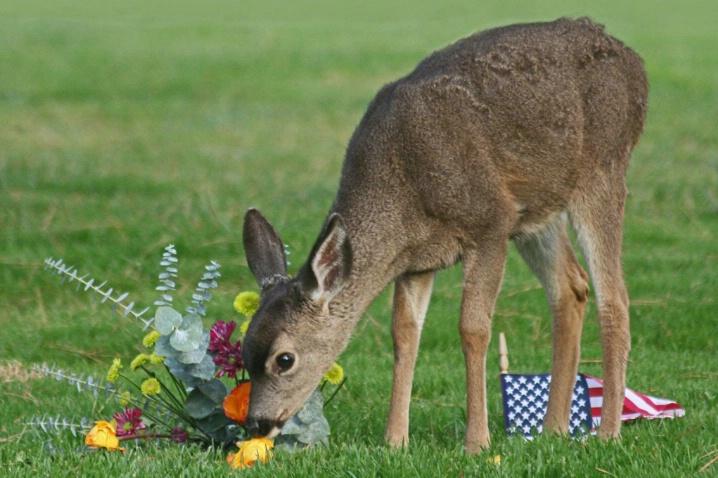 Bounty for Bambi on Veterans Day