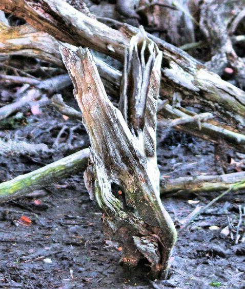 Drift Wood & More