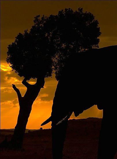 Masai Sunset