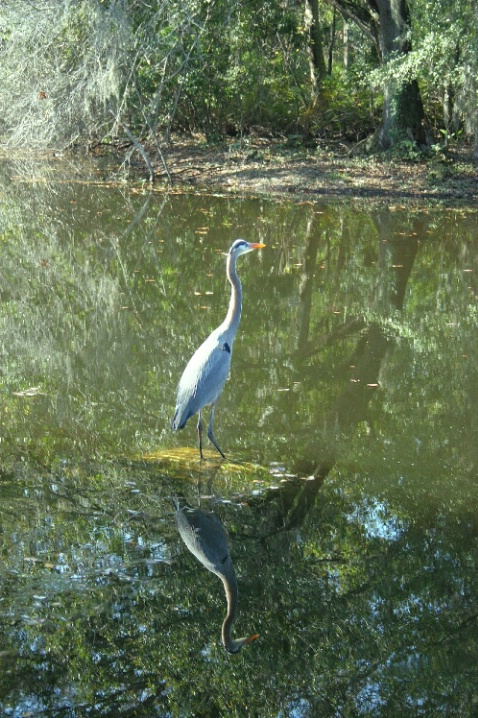Waiting Bird