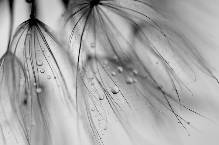 ~Fairy Droplets~
