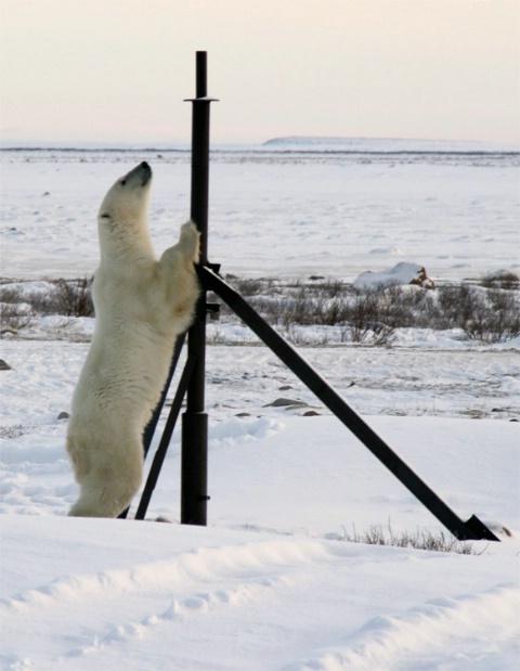 The Pole Dancer #3