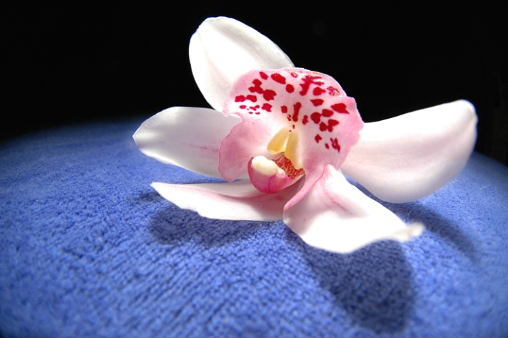 Orchid in the outer space