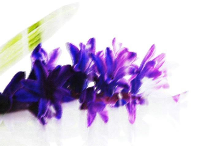Illusive purple