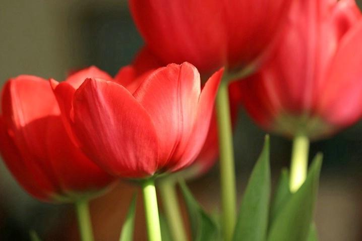 The Tulip Files