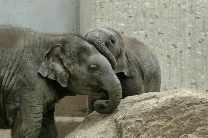 Elephant's love (2)...