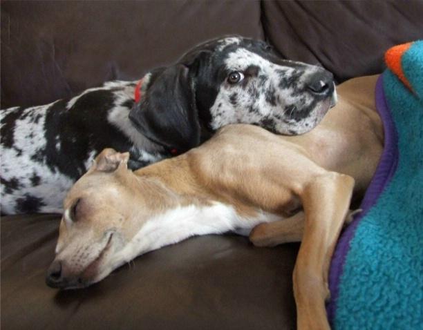 She Makes a Good Pillow !