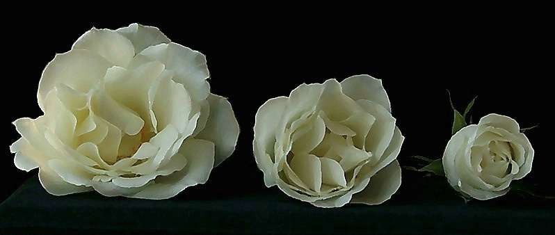 Floral Apertures
