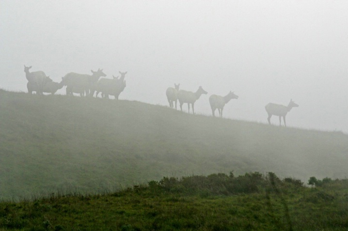 Point Reyes Fogscape