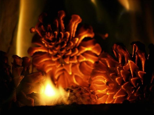 burning cones