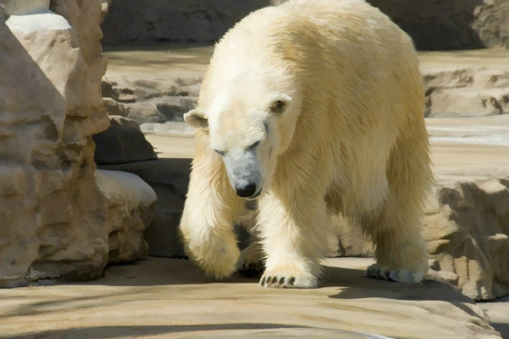 Polar Bear with Buzz Filter
