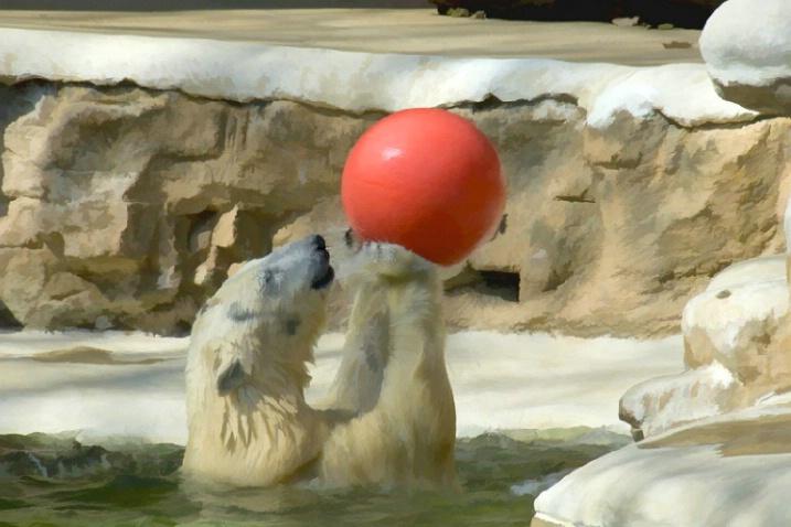 Polar Bears have fun too