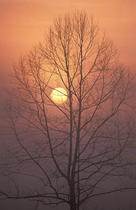 Cades Cove Tree Sunrise