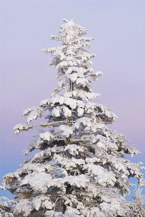 Clingmans Dome Hoarfrost