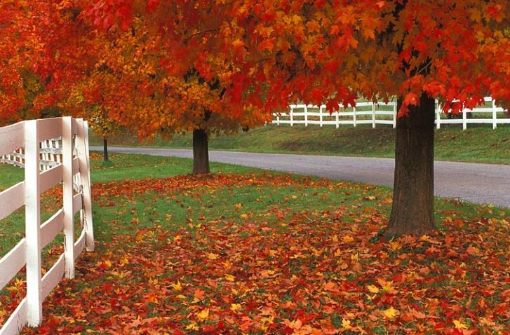 Worthington Valley Fall Fenceline