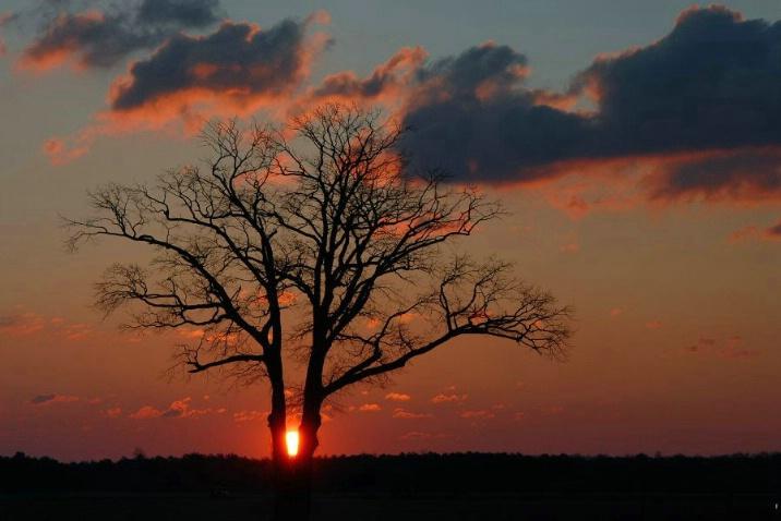 sun oak