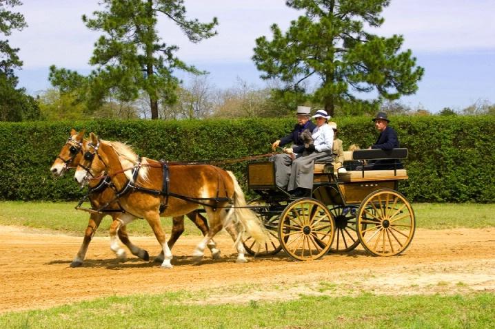 Carriage Parade @ Aiken Trials #5