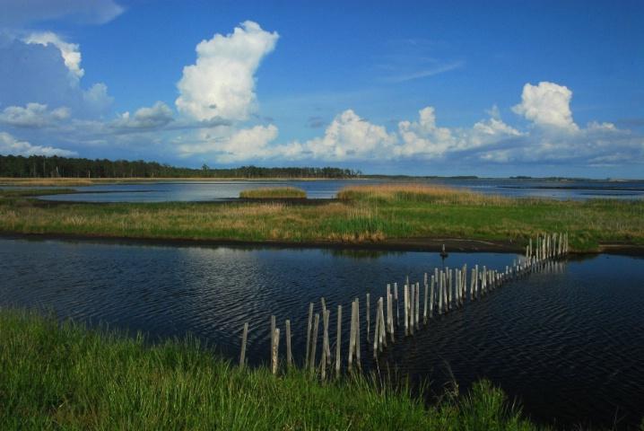Blackwater Snake Bog
