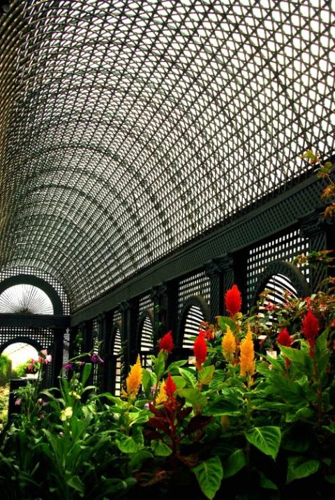 Greenhouse Dream