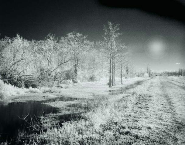 Loxahatchee Winter