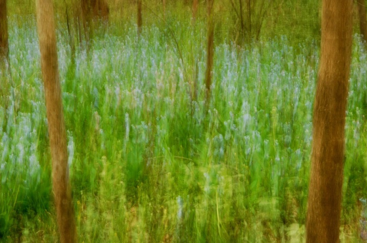 Spring Forest Impression