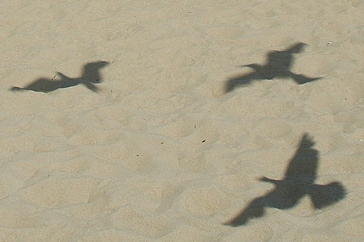 Seagull shadows in the sand