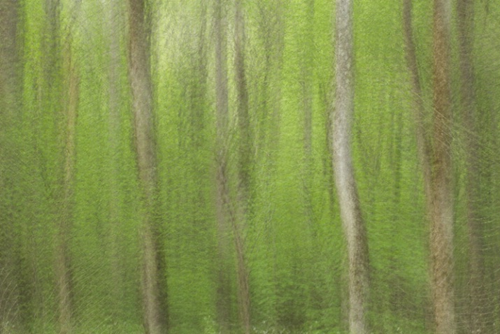 Spring Trees Multiple Exposure 6062