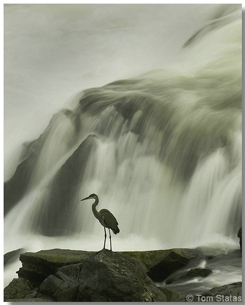 Great Heron and Great Falls